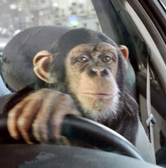 "Had to search on ""monkey driving a car,"" instead."
