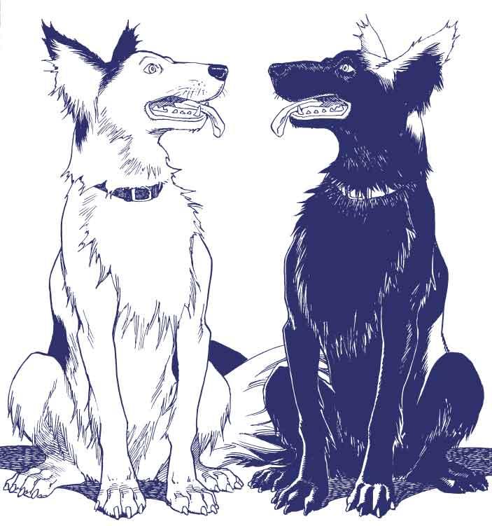 OPUS_chiens